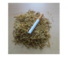 SPRZEDAM tyton papierosowy  VIRGINIA GOLD tel. 785-405-946