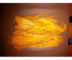 Sprzedam liście tytoniu VIRGINIA
