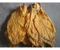 liście tytoniu SUPER JAKOŚĆ