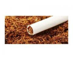 tel. 573-384-o45. tyton. Tani tytoń. gliwice, zabrze i okolice. okazja! 70 zł za kg.