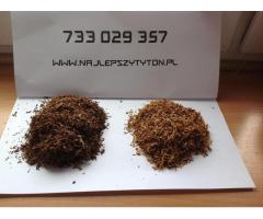 Tani Tytoń, tytoń papierosowy 85 zł aromatyczny pewniak